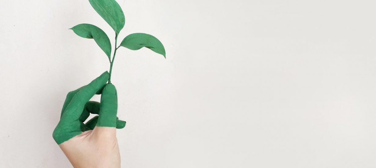 sostenibilidad-packaging-futuro.jpg